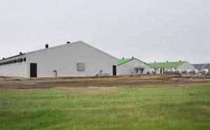 Строительство агропромышленных комплексов.